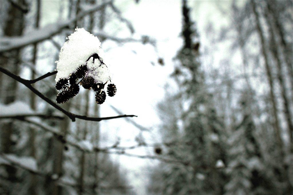 winter-blog2