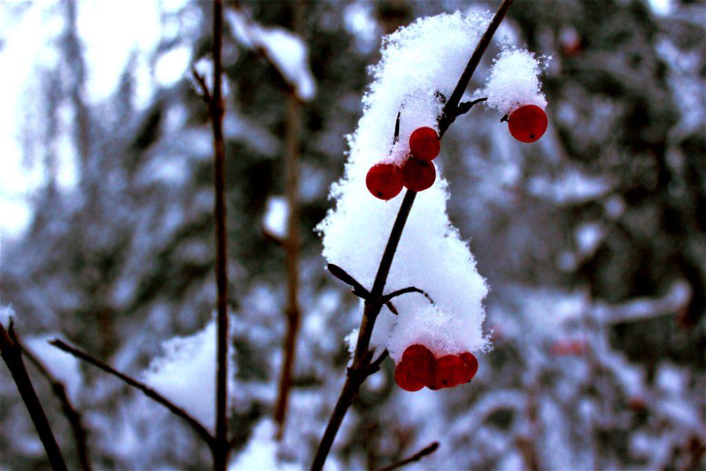 winterblog5